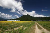 ヒマワリ@若狭小浜 恵のひまわり畑 - デジタルな鍛冶屋の写真歩記