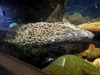 井の頭自然文化園・水生物館~トウキョウダルマガエルの給餌 - 続々・動物園ありマス。
