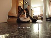 猫ちゃんのお世話月間 - Wisdom of Cats