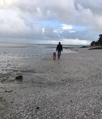 ふわふわキラキラ、午後の散歩/ Winter Walk & Dancing Lights - アメリカからニュージーランドへ