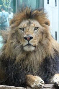 暑き日のライオンたち - 動物園放浪記