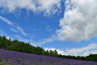 富良野にて⑥ - Photo Of 北海道大陸