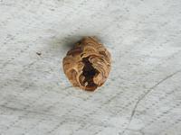 スズメバチの巣を駆除 - inside out