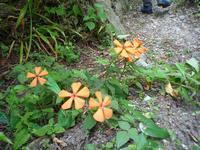 野草 - 野の花