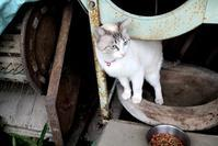 外猫ココちゃん - きつねこぱん