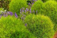 チャバネセセリ - あだっちゃんの花鳥風月