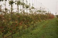 待ち望んだ恵みの雨 - リンゴ園で想う