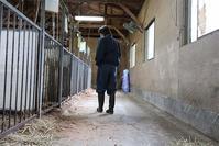 ムカイ先生の職場復帰 - 小比類巻家畜診療サービス スタッフの牧場日誌
