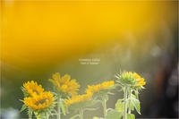 vitamin color:[井戸端会議] 其の3 - 君に届け