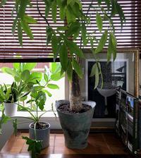 中の緑と外の緑 - kukka  kukka