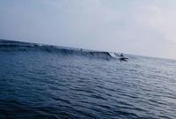 海が先か?おはなが先か? - AFRO SURF