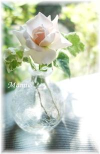 薔薇が 小さく 咲いていました - おだやかに たのしく Que Sera Sera
