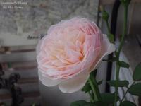 Cuesta abajo - Gardener*s Diary
