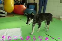 リハビリテーション - HAMAsumi-Life