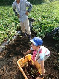 芋掘り - 山脇農園ブログ
