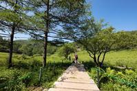 夏の花山「入笠山」富士見パノラマリゾート~入笠湿原 - Full of LIFE