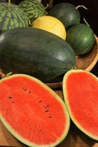 ■Myファーム発【様々な品種の西瓜の収穫^0^】西瓜祭り~♪ - 「料理と趣味の部屋」