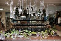 酒と花の日々。始まります。札幌大丸 7階 ライフスタイル売場 - glass cafe gla_glaのグダグダな日々。
