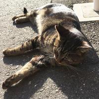 体重測定(2018年8月)〜8月8日は猫の日?〜 - NEKO LOG 別館「パーマン猫と申します」