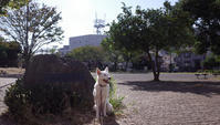 Vol.1373 姥ヶ森公園 - 小太郎の白っぽい世界