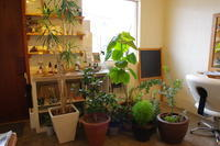 暴風に備えて植物を避難してみる - 館林の美容室~一人だから誰にも気を使わないプライベートな空間~髪を傷ませたくないあなたの美容室 パーセプションのウェブログ