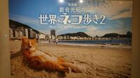 写真展~岩合光昭の世界ネコ歩き2~ - 日々是好日diary