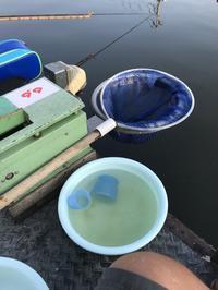 0804土  武蔵の池愛好会 - ヘラ釣りたいな