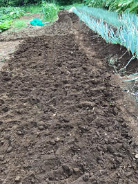 大根種蒔き、秋ジャガ植え付けなどに向けて土づくり終了8・7 - 北鎌倉湧水ネットワーク