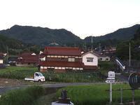 早朝散歩の収穫は〜トウモロコシと軍配ナズナ〜 - CROSSE 便り