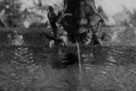 手水所 - フォトな日々