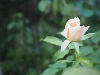 8月の庭Vol.2 - グリママの花日記