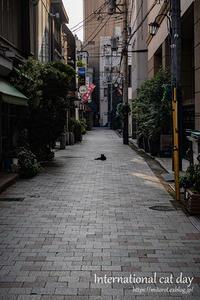 世界猫の日だニャー - GOOD LUCK!