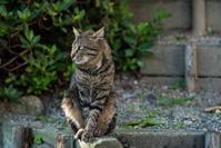 世界猫の日 - - 光景彡z工房 - ◇ SeasonII ◇