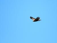 青い空に白い翼 - 綺麗な野鳥に遭いたくて