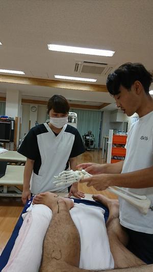 第140回 TOC体表解剖勉強会 下腿三頭筋・長短腓骨・膝窩筋 - たてやま整形外科クリニック スタッフブログ