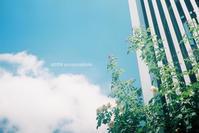 空の色。 - Yuruyuru Photograph