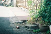 裏通り。 - Yuruyuru Photograph