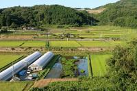トラちゃん田んぼ - ~葡萄と田舎時間~ 西田葡萄園のブログ