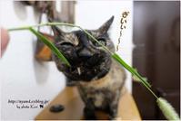猫クサ命! - 4にゃん日記+
