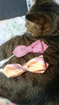 ダイソーの100円ネクタイを子供用蝶ネクタイにリメイク - チェリーちゃんねる  第2章