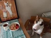 大好きな桃の朝食 - ミニチュアブルテリア ダージと一緒3