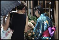 風鈴市 -11 - Camellia-shige Gallery 2