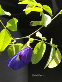 夏の青 - Bleu Belle Fleur☆ブルーベルフルール