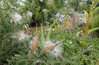 学生インターンシップ(独協大と姫路商業高校) - 手柄山温室植物園ブログ 『山の上から花だより』