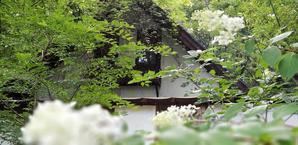 8月23日(木)森の自由遊び&森のがっこう説明会を開きます - 森のTERRA