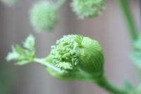 """英国メディカルハーバリスト3人の勉強会 - 英国メディカルハーバリスト&アロマセラピストのブログ""""Herbal Healing 別館"""""""