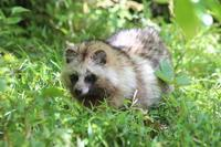 4月の多摩動物公園~抱卵中のシロフクロウとイヌワシのヒナ - 続々・動物園ありマス。