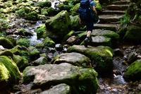 Rock Garden - GreenLife