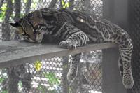 夜の動物園と「メロディ」 - 動物園放浪記