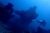 18.8.10 晴れ男(女)Power - 沖縄本島 島んちゅガイドの『ダイビング日誌』